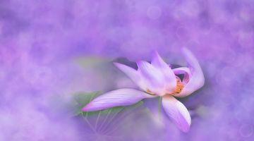 Бесплатные фото вода,цветок,растение,белый,фотография,пурпурный,лепесток