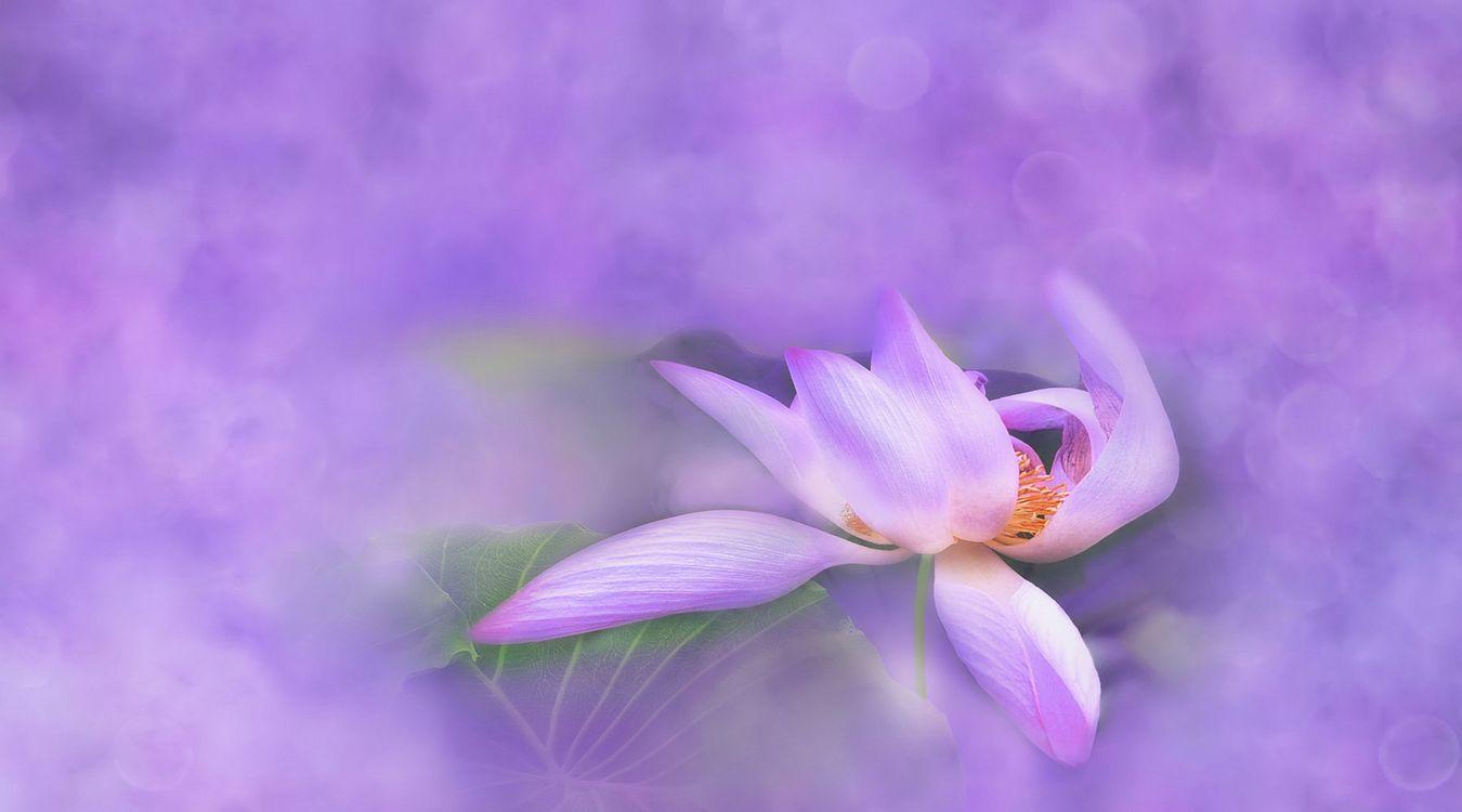 Фото бесплатно вода, цветок, растение - на рабочий стол