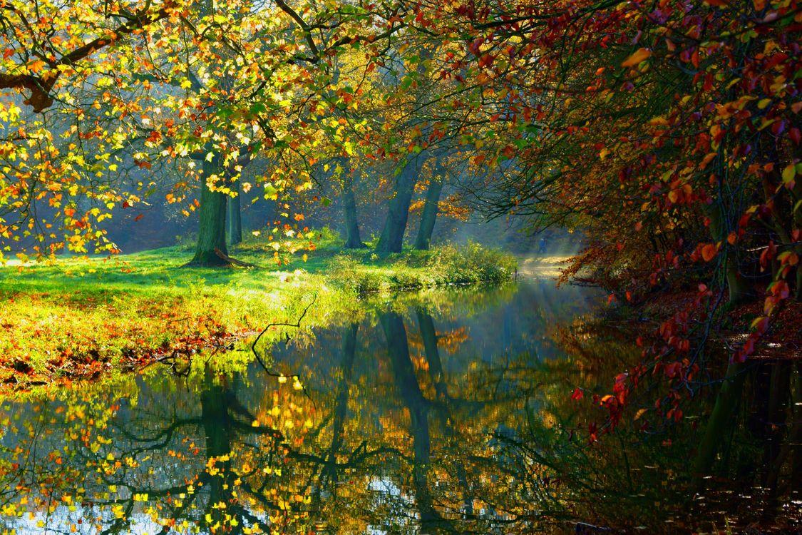 Обои осень, осенний парк, лес картинки на телефон