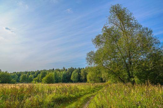 Фото бесплатно Бирюлёвский лесопарк, Москва, Россия