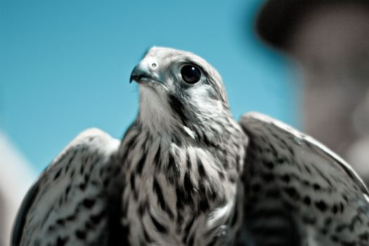 Photo free Falcon, bird, predator