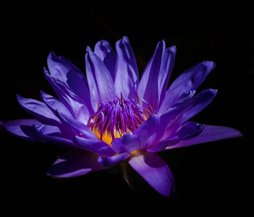 Цветок старой лилии · бесплатное фото