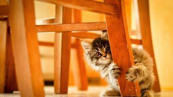 Заставки животные, дети, кошки