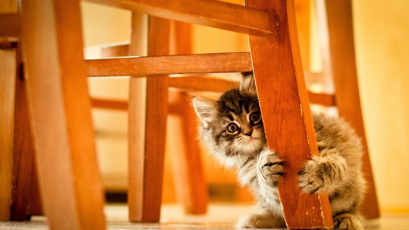 Фото бесплатно животные, дети, кошки - на рабочий стол