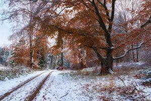 Заставки Парк, природа, лес