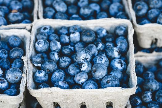 Blueberries in the trays