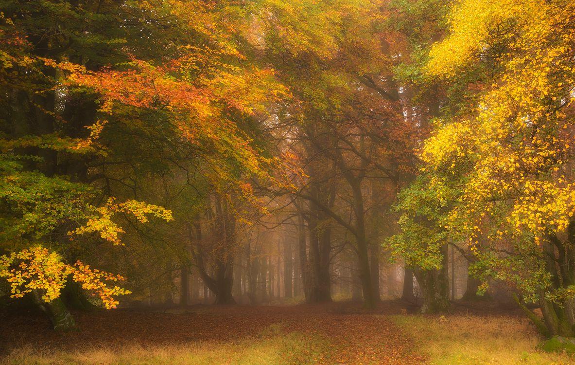 Фото бесплатно осень, парк, деревья, осенние листья, осенние краски, краски осени, природа, туман, пейзаж, пейзажи