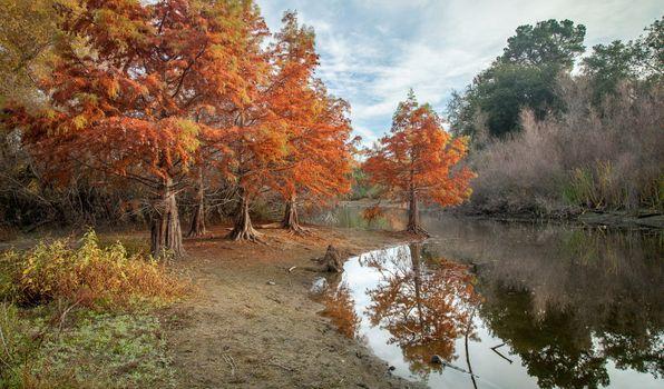 Фото бесплатно пруд, природа, парк