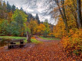 Бесплатные фото осень,парк,лес,деревья,дорога,пруд,лавочка