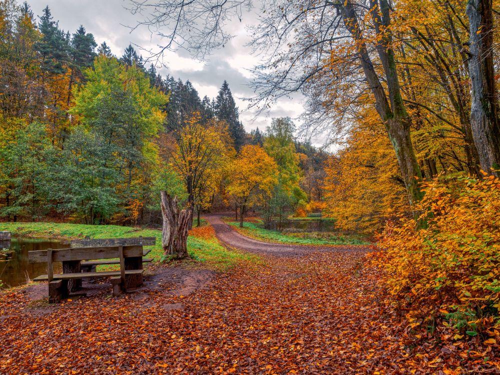 Обои скамейки, деревья, лес картинки на телефон