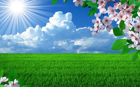 Фото бесплатно цветение, ветка, вишня
