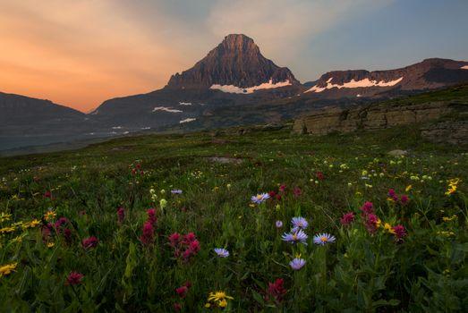 Wildflowers foothills · free photo