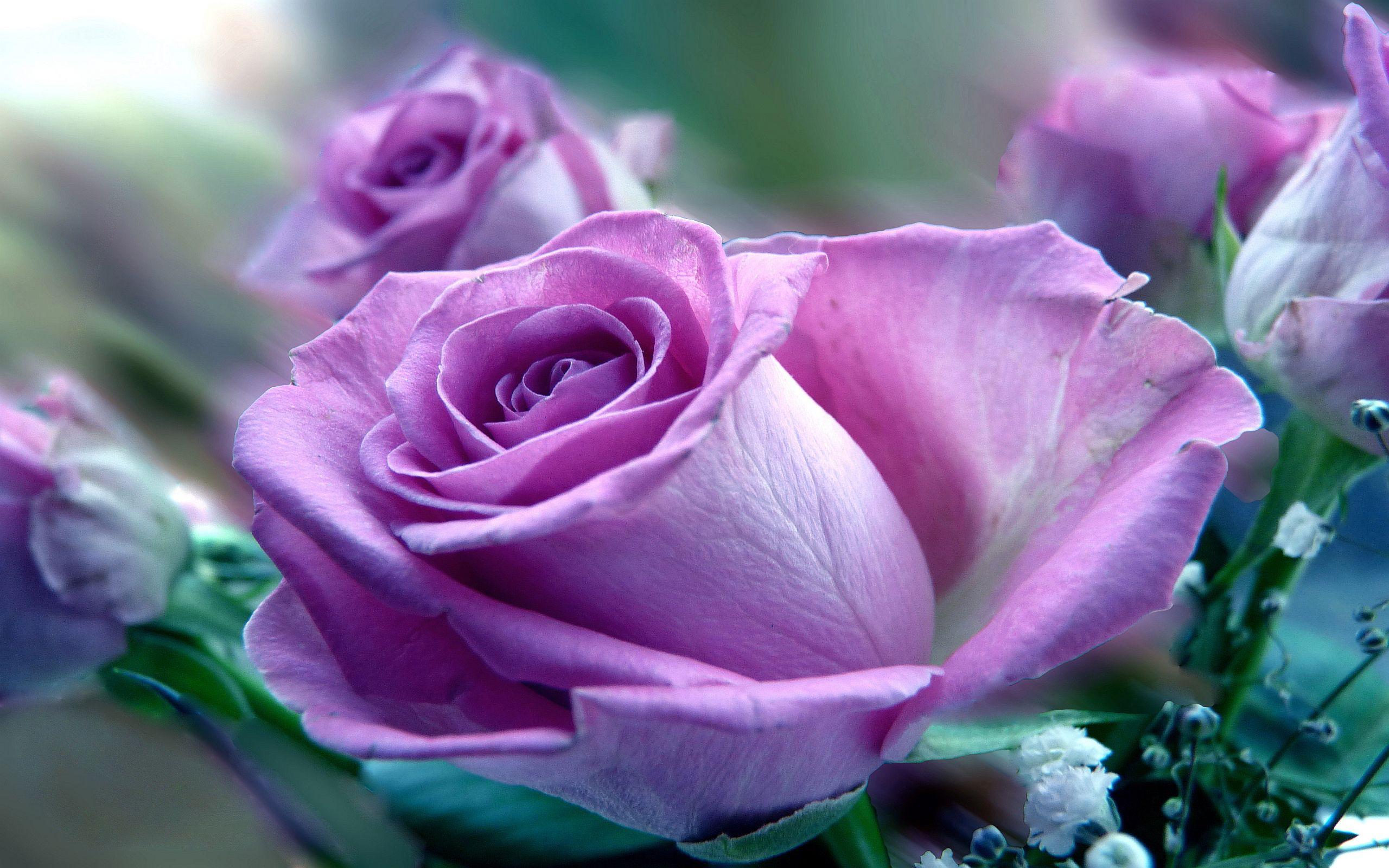 картинки красивые цветы большой формат стерильное пространство поделено