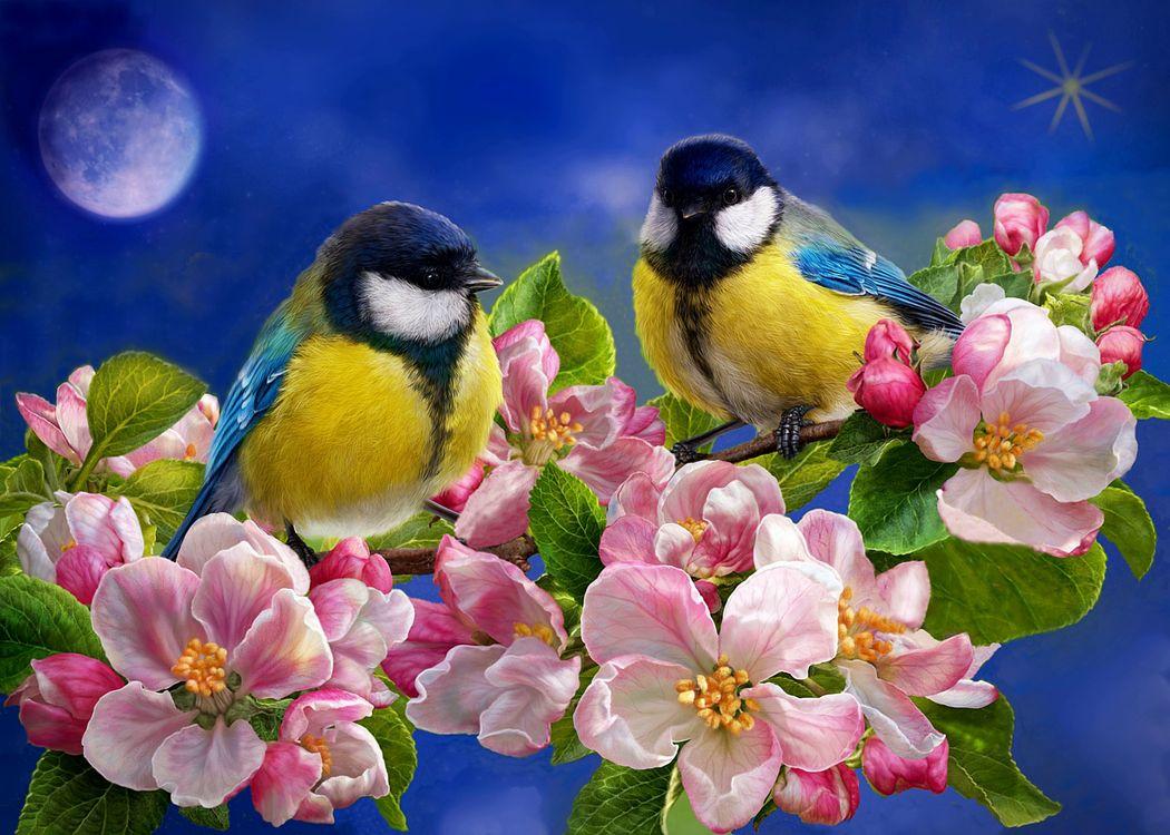 птицы на ветке · бесплатное фото