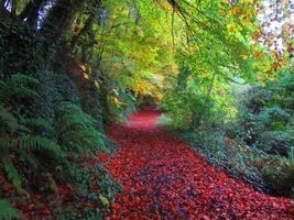 Заставки The Ward River Jacko Park,Дублин,Ирландия,парк,лес,осень,дорога