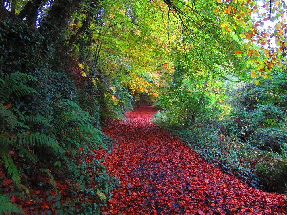 Обои The Ward River Jacko Park, Дублин, Ирландия картинки на телефон