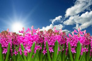 Фото бесплатно весна, цветочный пейзаж, яркий