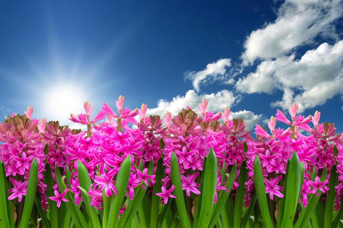 Обои весна, цветочный пейзаж, яркий, солнышко, тепло, цветы, небо, облака, солнце, гиацинт, клумба, сезон, цветение, флора на телефон | картинки цветы