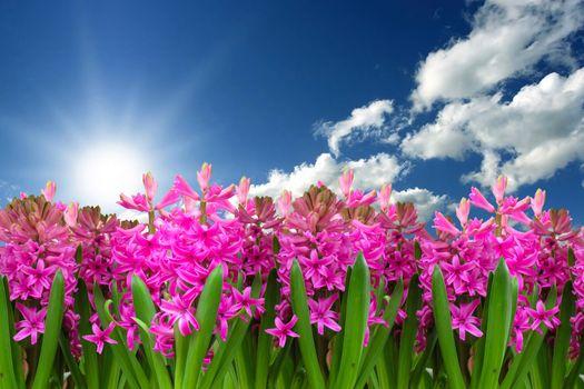 Бесплатные фото весна,цветочный пейзаж,яркий,солнышко,тепло,цветы,небо,облака,солнце,гиацинт,клумба,сезон
