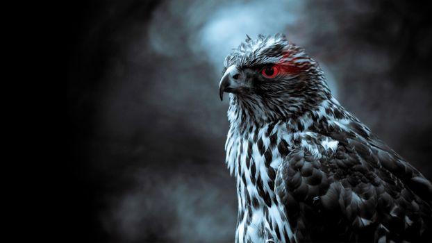 Photo free eagle, red eyes, figure