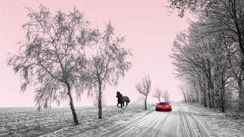 Бесплатные фото поле,дорога,зима,лошадь,конь,мустанг,автомобиль