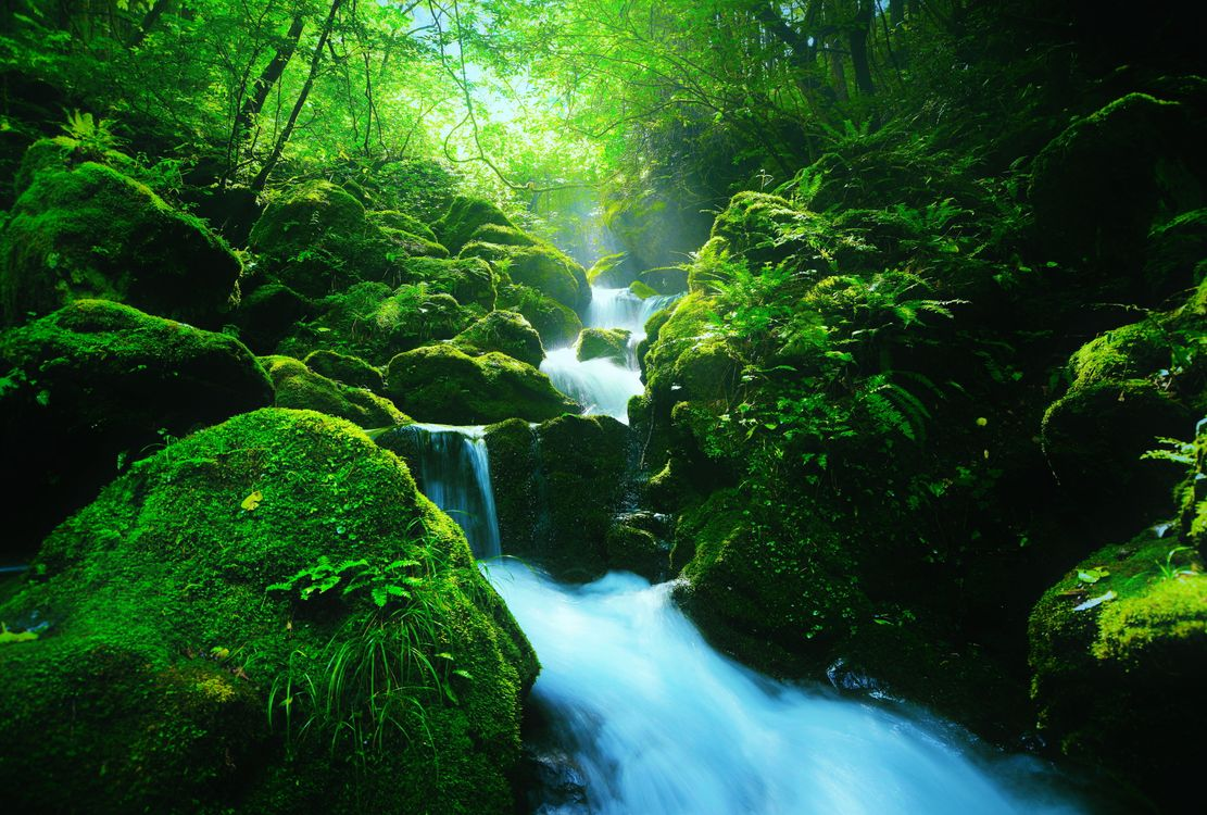Free photo forest, nature, Japan - to desktop