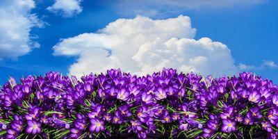 Фото бесплатно цветок, небо, облако