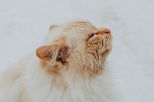 Заставки кот, бакенбарды, от маленьких до средних кошек