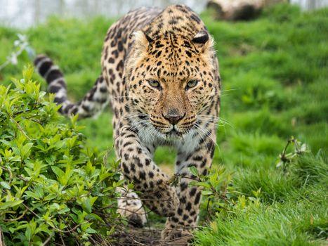 Photo free beast, animal, big cat