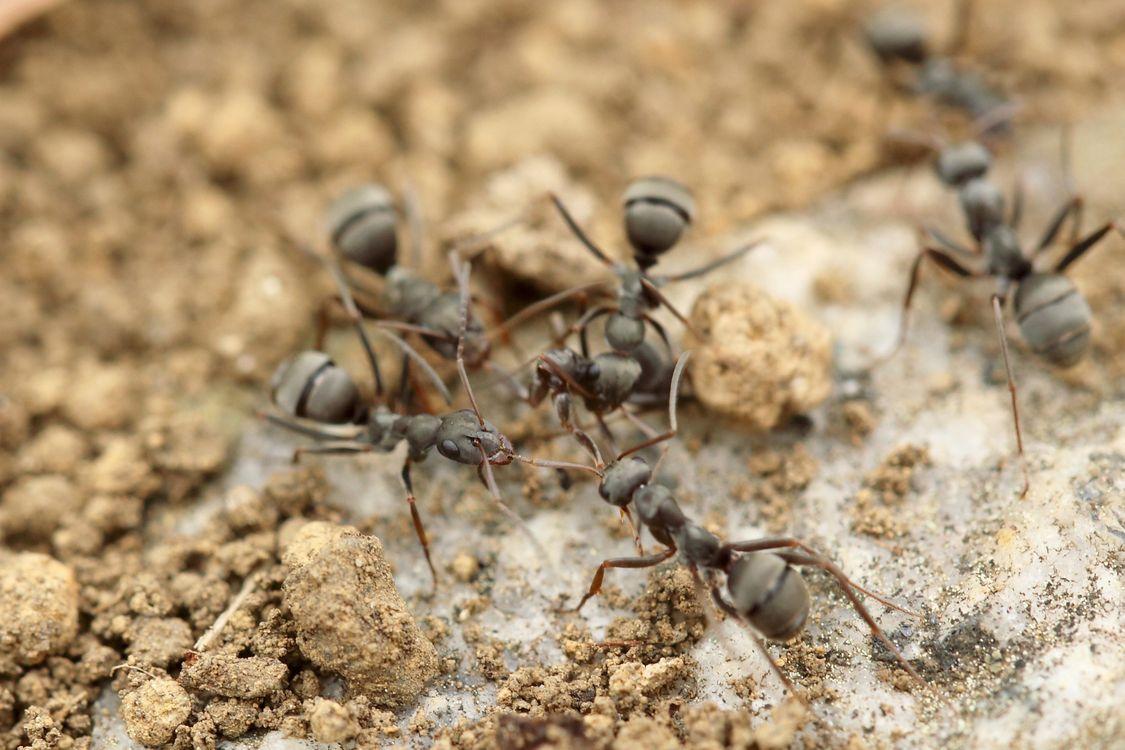 Фото песок земля дикая природа - бесплатные картинки на Fonwall