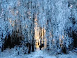 Бесплатные фото зима,лес,деревья,природа,пейзаж,сказочная зима