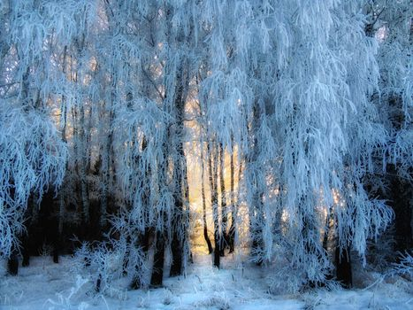 Красивые обои зима, лес на телефон