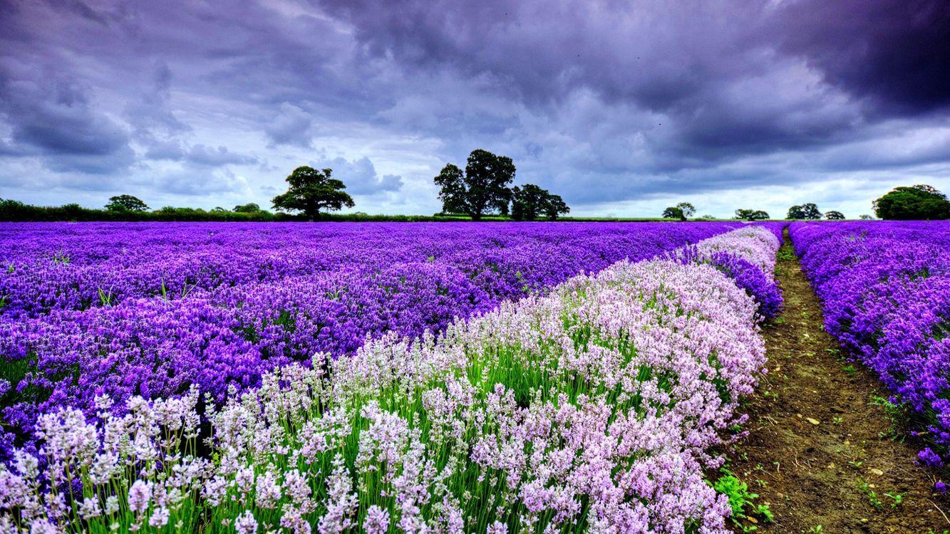 Фото бесплатно Цветок, весна, красота - на рабочий стол