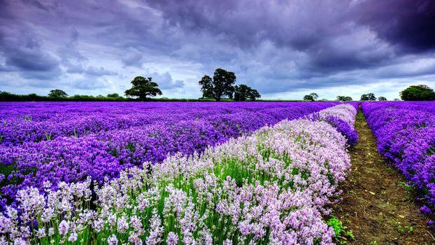 Заставки Flower, spring, beauty