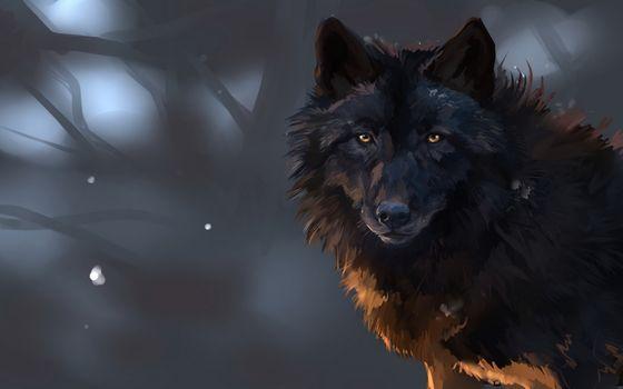 Фото бесплатно волк, черный, рисунок