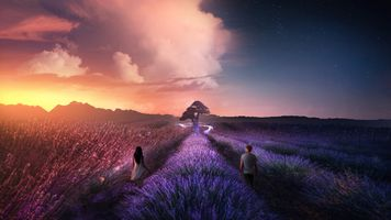 Photo free sunset, lavender, field
