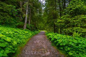 Заставки Бад-Гаштайн, лесная тропинка, Австрия