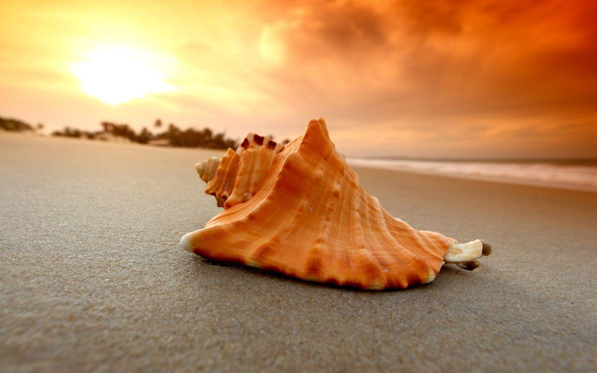 Обои ракушка на пляже, пляж, песок картинки на телефон
