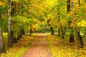Фото бесплатно Москва, осенние листья, россия