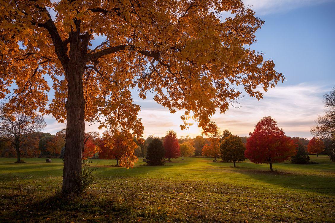 Разноцветные деревья в осенний сезон · бесплатное фото