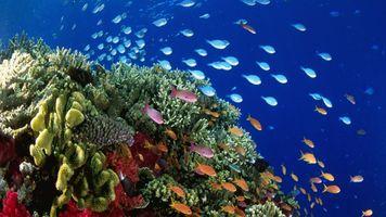 Фото бесплатно Undersea, colorful, fishes