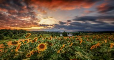 Заставки небо, цветы, подсолнухи