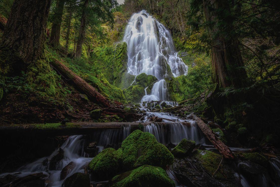 Фото бесплатно лес, водопад, деревья, поток, камни, мох, зелёный, природа, пейзаж, пейзажи