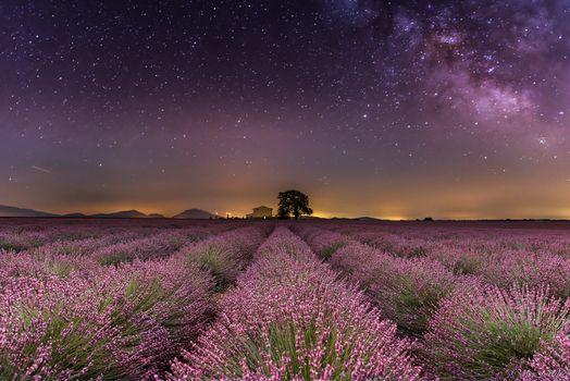 Photo free night, field, lavender
