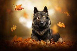 Листопад и серый пёс · бесплатное фото