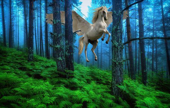 Photo free the winged horse, photoshop, trees
