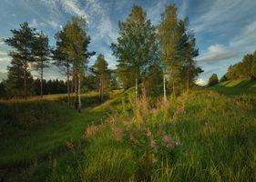 Фото бесплатно лето, поле, холмы