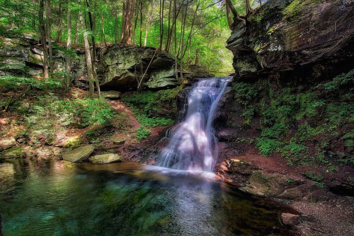 Фото бесплатно лес, пейзаж, пруд - на рабочий стол