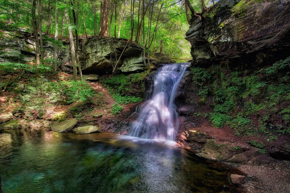 Обои лес, пейзаж, пруд картинки на телефон