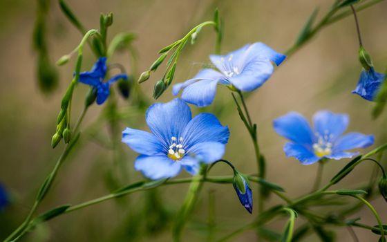 Photo free blue flowers, buds, petals